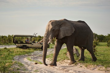 Viewing elephant on a game drive at Belmond Savute Elephant lodge