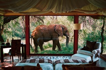 Glass-walled suites for awesome views at Sanctuary Makanyane Safari Lodge in Madikwe, South Africa
